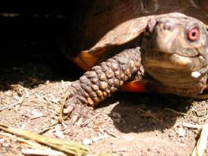 turtle_JPG_w560h420